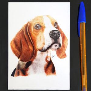 Carte postale Beagle