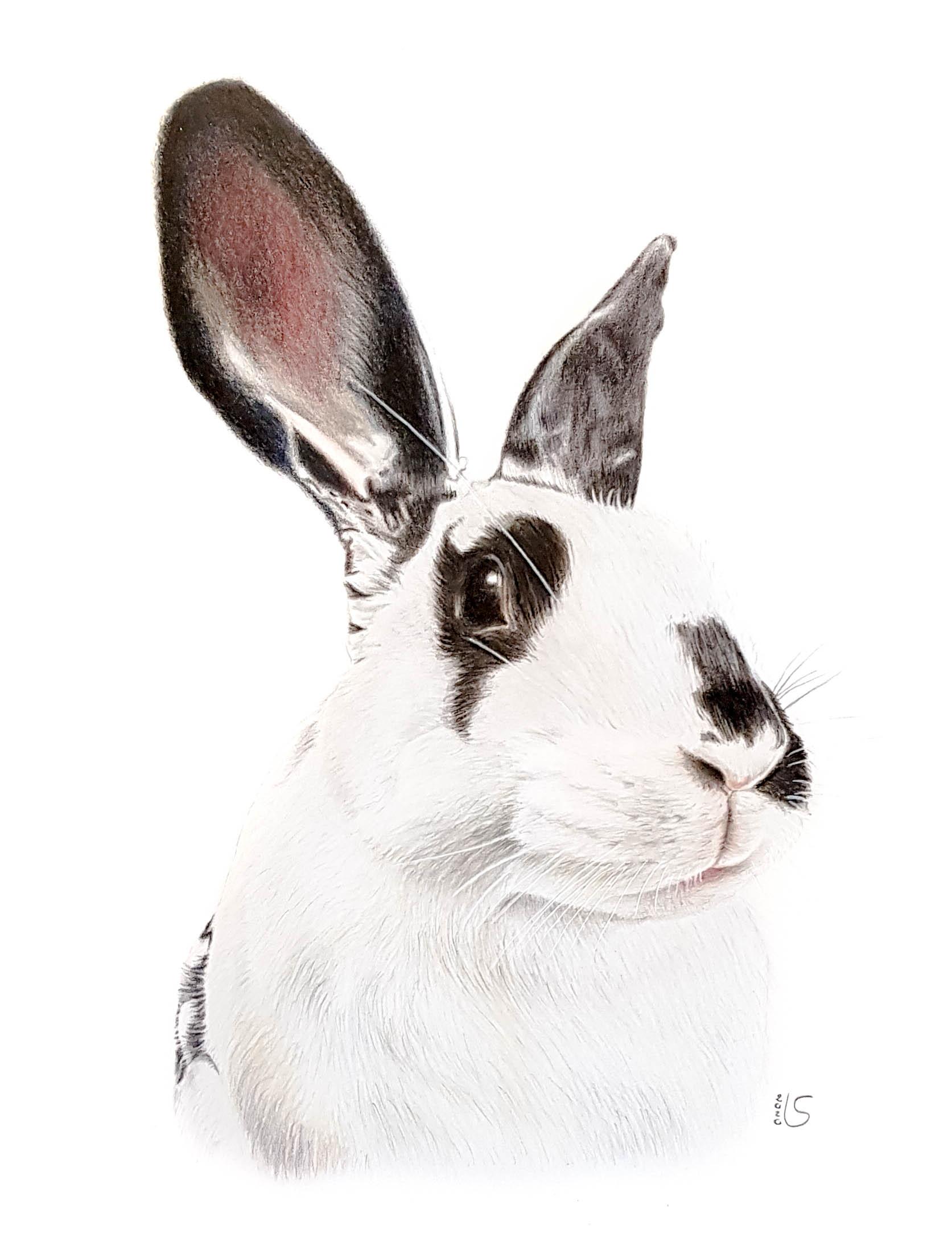 Dessin de lapin aux crayons de couleur par Laurie Sénacq Portraitiste
